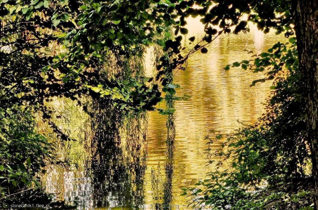 w złocie jesieni zieleń zatopiona ... bo się Tobie podoba :)