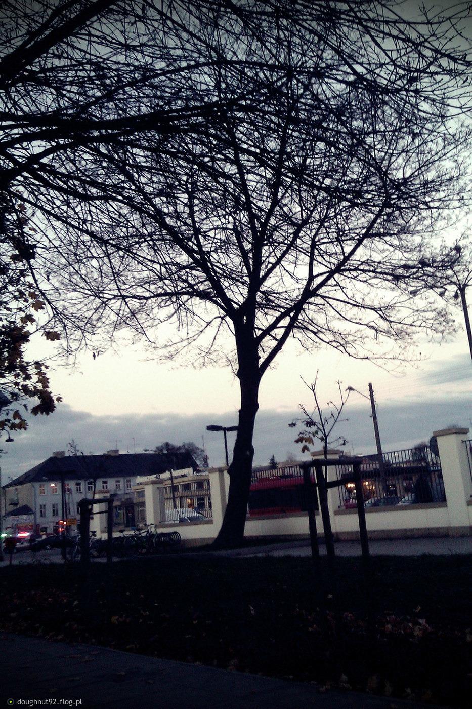 Koniec jesieni..