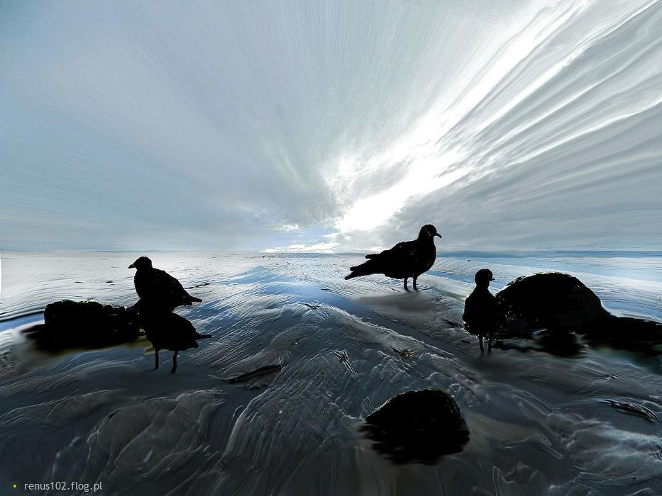 """""""`Po błękitnym niebie nie tylko suną ptaki, ale i również ludzkie marzenia. """""""