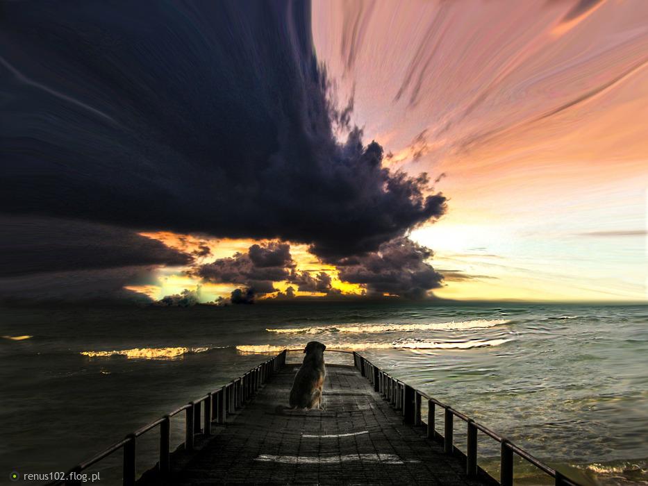 """.""""Na początku Bóg stworzył człowieka, ale widząc go tak słabym, dał mu psa"""".... - /Alfons Toussenel/"""