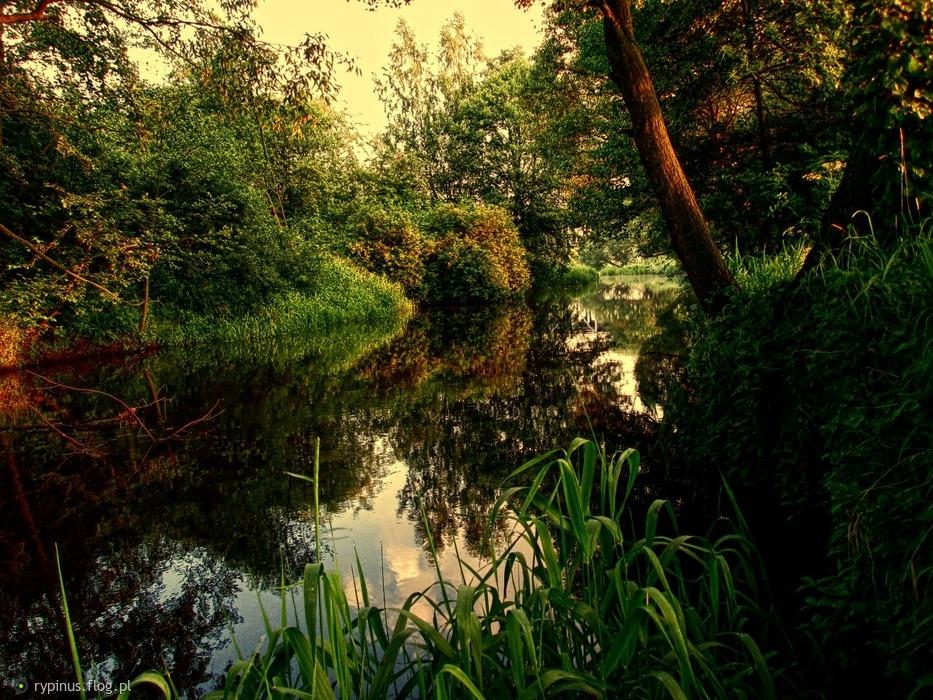 Rzeka Pokrzywnica