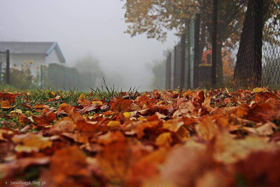 Jesienny poranek