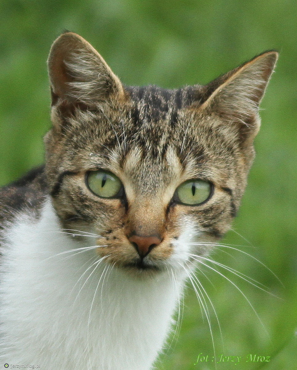 Kot Dachowiec Spotkanie Na łące Fotoblog Jerzymflogpl