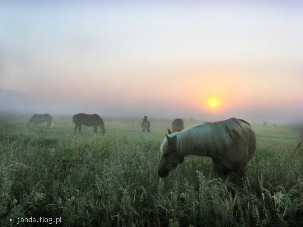 http://s10.flog.pl/media/foto_middle/7276705_w-lunie-poranka.jpg