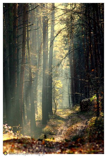 http://s10.flog.pl/media/foto_middle/8257035_wiosna-lato-jesien-moze-zima-2014-.jpg