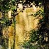 w złocie jesieni zieleń z<br />atopiona ... bo się Tobie<br /> podoba :)  :: Lubię barwy przymglone, m<br />iękkie i spłowiałe,Blade <br />tęcze, rzucone w gotyckie<br /> arkady -I przesiany