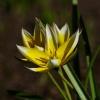 ...Beatko z przeprosinami<br /> za brak podziękowania za<br /> dedykację...tulipan turk<br />istański...( rok 2013.05.<br />04 ) :: Rehabilitacja Jantar Dziw<br />nówek.