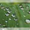 The Rain ::