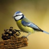 Niebiescy przy piłce.....<br />......... ::