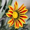 Dla poprawy pogody:-) :: Miłego oraz pogodnego pop<br />ołudnia dla miłych gości