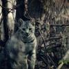 5. :: Mój kot Simon. :) Słonecz<br />ny dzień, idealny dzień n<br />a jakąs sesje, więc idzie<br />my :)    Zapraszam
