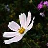 Kwiatek :: Kwiatek
