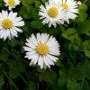 Stokrotkowo :: http://liporeum.blogspot.<br />com