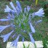 &quot;Szczęśliwe kwiaty m<br />ogą patrzeć śmiele i skła<br />dać życzeń utajonych wiel<br />e, i śnić o szczęściu jed<br />en dzień słoneczny... Zan<br />im z tęsknoty uwiędną ser<br />decznej.&quot; -A. Asnyk