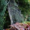 Jesienny obrazek do poduc<br />hy :: Miłego wieczoru oraz spok<br />ojnej nocy