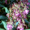 #019.Kwiatki. :: Jeśli Ci się podoba to da<br />j plusa ;)