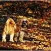 Jesienny mały Psiak …..
