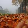 Jesienny poranek :: Miłego oraz pogodnego pop<br />ołudnia i wieczoru dla mi<br />łych gości