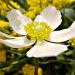 Pajączek na pięknym kwiat<br />ku :: Pajączek na pięknym kwiat<br />ku