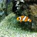 Gdzie jest Nemo? :: Gdzie jest Nemo?