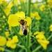 Człowiek wytwarza zło, j<br />ak pszczoła miód.   :: Nie za&amp;shy;bijaj. Psz<br />czoła nie zro&amp;shy;bi <br />ci nic złego,  na&amp;shy<br />;wet jeśli użądli, a